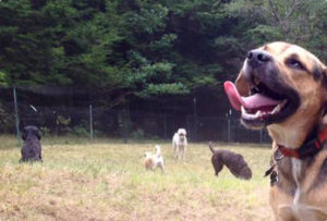 Dog Day Care Sherborn